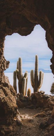 Giant Cactus 14m height!