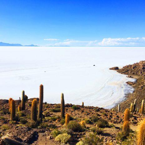 Isla Incachuasi Uyuni