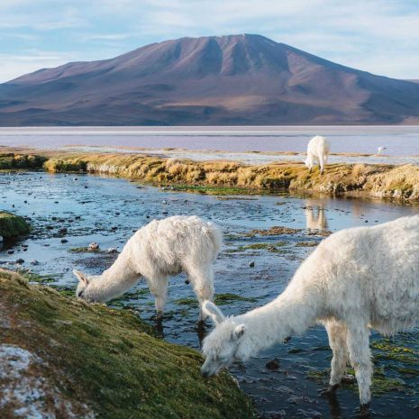 visit south america atacama to uyuni express 3 day llamas